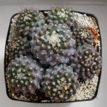 Plantas singulares